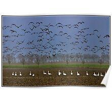 Birds Paradise Poster