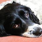 My parents' pet Rosie by darthsy