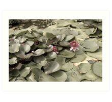 waterlilies in a cool pond Art Print