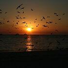 Sunset Flight by Cheri Bouvier-Johnson