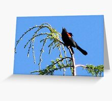 Red-Winged Blackbird Singing from Cypress Tree Greeting Card