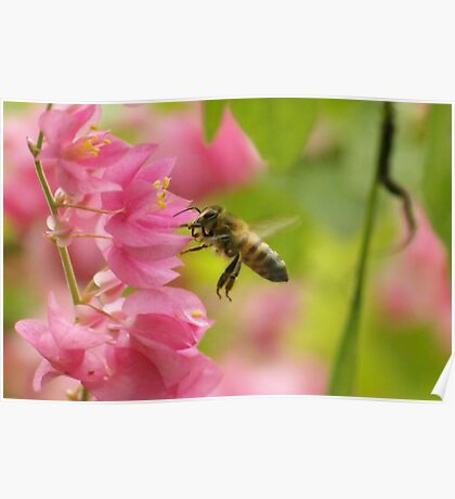 Bumble Bee savoring Red Buds Poster