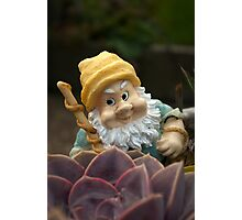 Sunnyboy the Garden Gnome Photographic Print