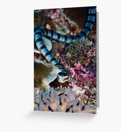 Banded sea snake Greeting Card