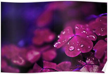 Tiny violet things by Dominika Aniola