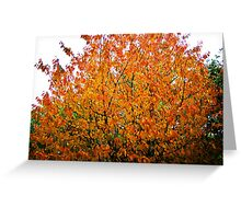 autumn collection 09 - 2 Greeting Card