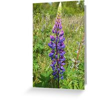 Luscious Lilac Lupin Greeting Card