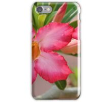 Desert Rose iPhone Case/Skin