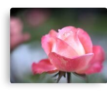 Pink Rose with Lensbaby Canvas Print