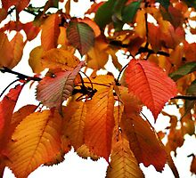 autumn collection 09 - 3 by gemma angus
