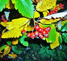 forest berries by gemma angus