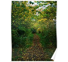 wooded pathway Poster
