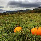 Pumpkin Anyone? by mhuaylla