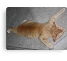 Flat Cat 4 Metal Print