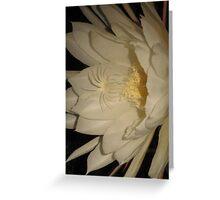 Night Blooming Epiphyllum Greeting Card