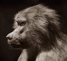 primate by louise