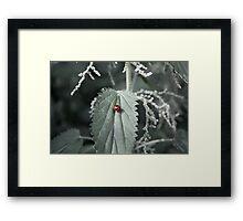 Luck Among the Nettles Framed Print