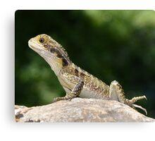 Reptiles are cute Canvas Print