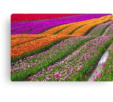 Monet Alive-colorful tulip field waves Canvas Print