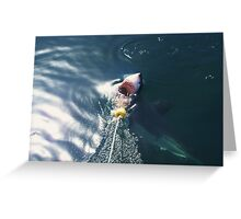 Taking the Bait - South Africa Greeting Card
