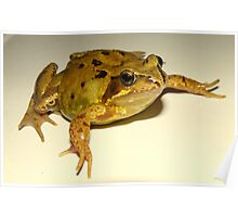 mr common frog Poster