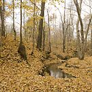 Fallen Leaves on the creek  by Sean McConnery