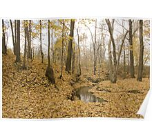 Fallen Leaves on the creek  Poster