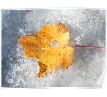 Autumn Leaf In Snow Poster