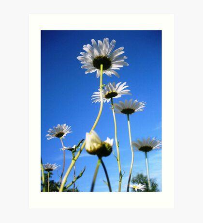 Dasie wild flowers series! Art Print