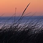 Grasses at sunset - St Ninian's Isle by ShroomIllusions