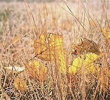 Fallen  leaves ,  Japan by yoshiaki nagashima