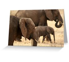 Elephants - Tarangiri National Park, Tanzania - 845, 10/11/10 Greeting Card