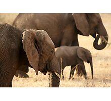 Elephants - Tarangiri National Park, Tanzania - 845, 10/11/10 Photographic Print