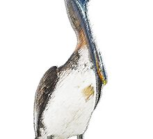 Pelican by Tom-Sky