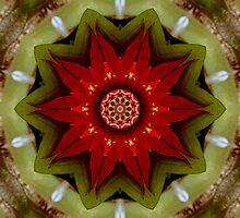 Red Bromeliad by Esperanza Gallego