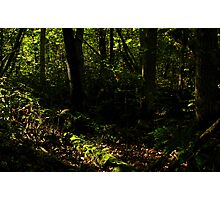 Primordial Forest Photographic Print