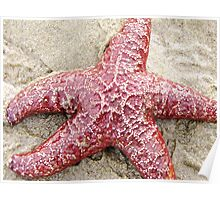 Live StarFish Find....Neptune Beach, outside Yachats, Ore Poster
