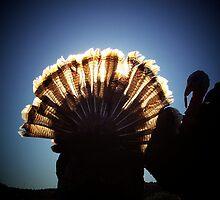 A Turkeys Sunrise by kimron