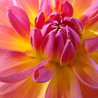 DAHLIA FLOWERS Master Gardener Calendar by BasleeArtPrints