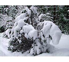 Snow Load Photographic Print
