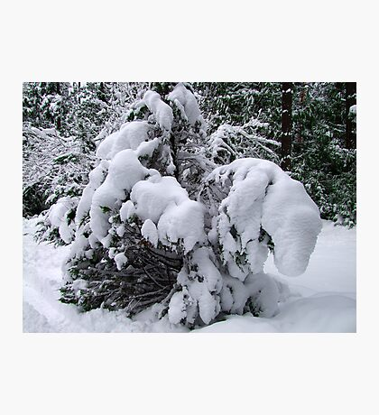 Snow Load Photographic Print