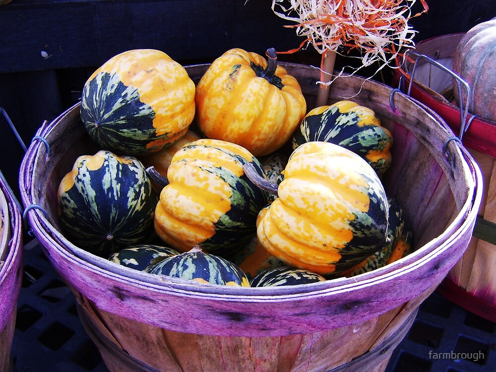 Baby Pumpkins by farmbrough