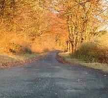 Autumnal North Yorkshire by TREVOR34