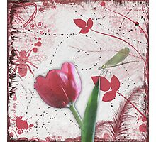 Tulip & Dragonfly Photographic Print