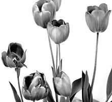 Tulips Extravaganza! by oddoutlet