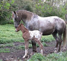 My New Appaloosa Colt Has Arrived! by skyhorse