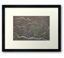 Grass Snakes #2 Framed Print