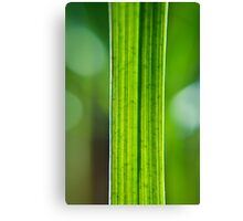 Plant Extracts Canvas Print