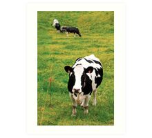 Holstein dairy cattle Art Print