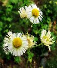 Frost Asters for Claude by RC deWinter